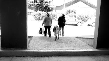 Los perros andan libres, sin lazos, en El Calafate